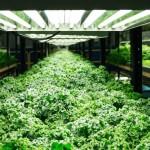urban-organics2